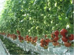 AGRITEX crop 7